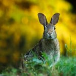 How To Repel Rabbits In Your Garden