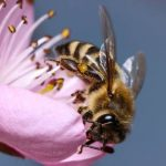 How To Build a Bee Friendly Garden